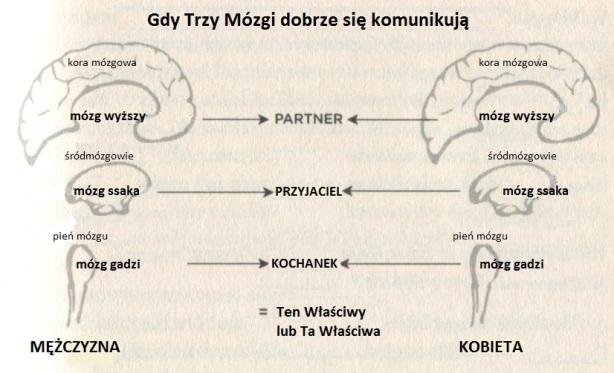 Gdy 3 mózgi dobrze się komunikują
